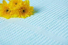 Yellow flowers on blue background Stock Photography