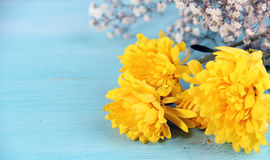 Yellow flowers blue background. Small Flower Concept and Decoration Stock Photo