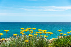 Yellow flowers with blue sea water and sky. In background royalty free stock photography