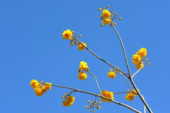 Yellow flowers in blue sky Stock Photo