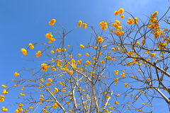 Yellow flowers in blue sky Stock Photography