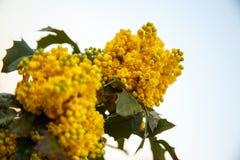 Yellow flowers. Stock Photo