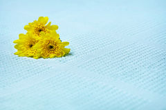 Yellow flowers on a blue towel Stock Image