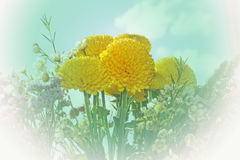 Yellow flowers. Royalty Free Stock Photography