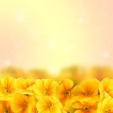 Yellow flowers with bokeh Stock Image