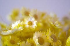 Yellow Flowers Bouquet  with blurred background Stock Photos