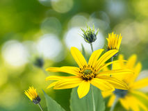Yellow flowers bouquet on the blurred garden background Stock Photography