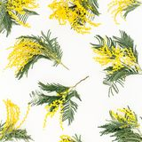 Yellow flowers branches on white background. Flat lay, top view. Yellow flowers branches on white background. Flat lay stock image