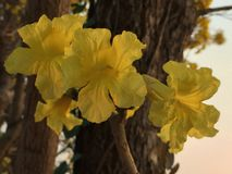 Yellow flowers. The bright yellow flowers evening Stock Photo