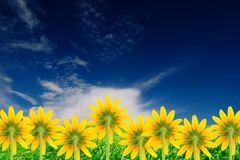 Yellow Flowers on Bright Summer Background Royalty Free Stock Photos