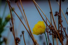 Yellow flowers. And brown leaves deam Royalty Free Stock Photography