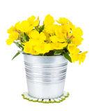 Yellow flowers in bucket Royalty Free Stock Image