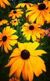 Yellow flowers. Bugs on flowers royalty free stock images