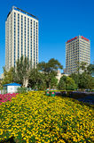 The yellow flowers and buildings Royalty Free Stock Photography