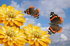 Yellow flowers and butterflies Stock Photography