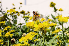 Yellow flowers and a butterfly Stock Photo