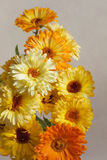 Yellow flowers calendula Stock Images