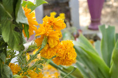 Yellow flowers at the cemetery. During Day of the dead Stock Images