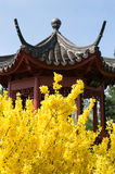 Yellow flowers and the Chinese Pagoda. Chinese pagoda in the yellow flowers in the spring Royalty Free Stock Image