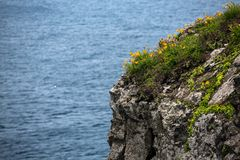 Yellow flowers on the cleavage against the sea stock photography