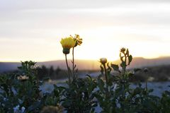 Yellow flowers. Close up of some yellow flowers at sunset stock photos