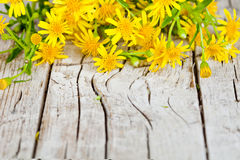 Yellow flowers closeup on rustic wooden background Stock Image