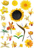 Yellow flowers collection isolated on white. Illustration with yellow flowers collection isolated on white background Royalty Free Illustration