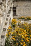 Yellow flowers in courtyard of old house royalty free stock photo