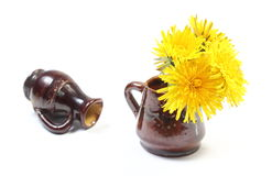 Yellow flowers of dandelion in brown vase. Bouquet of yellow fresh flowers of dandelion in brown vase and overturned vase in background. Isolated on white royalty free stock image