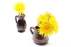 Yellow flowers of dandelion in brown vases. Bouquet of yellow fresh flowers of dandelion in brown vases. Isolated on white background royalty free stock image