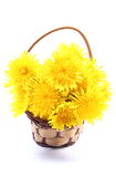 Yellow flowers of dandelion in wicker basket. Bouquet of yellow fresh flowers of dandelion in wicker basket. Isolated on white background stock photos