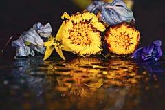 Yellow flowers on dark background Stock Photo