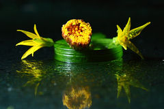 Yellow flowers on dark background Royalty Free Stock Images