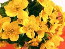 Yellow flowers. In desk Stock Photo