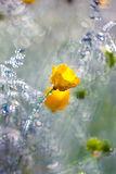 Yellow flowers in  dew Stock Images