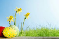 Yellow Flowers and easter eggs Stock Photo
