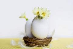 Yellow flowers in  eggshells Royalty Free Stock Photography