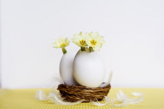 Yellow flowers in  eggshells Royalty Free Stock Images