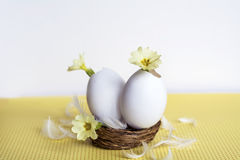 Yellow flowers in  eggshells Royalty Free Stock Image