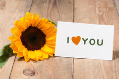Yellow flowers and empty paper for your text on wooden backgroun Royalty Free Stock Photos