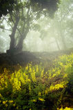 Yellow flowers in enchanted forest with fog Royalty Free Stock Image