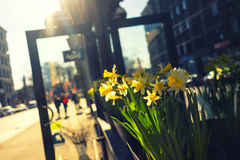 Yellow flowers at the entrance to the building on the street in Stock Photography