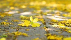 Yellow flowers fallen on floor. stock video