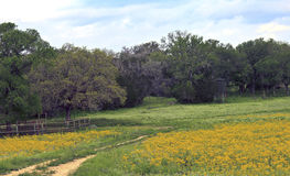 Yellow flowers in a field. With hay bales, road, and deer blind Stock Photography