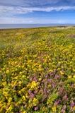 Yellow flowers field Stock Image