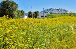Yellow flowers field with Ostuni on background royalty free stock photos