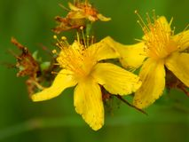 Yellow flowers on the field. Close up Stock Photos