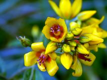 Yellow flowers on the field. Close up Stock Images