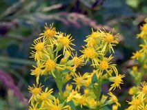 Yellow flowers on the field. Close up Stock Photo
