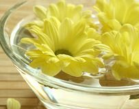 Yellow flowers floating in bowl. Stock Image